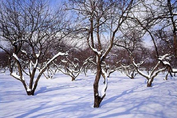 суровые зимы Подмосковья