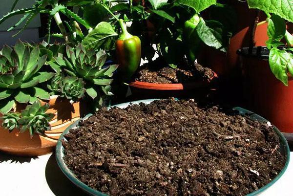 компост для контейнерных растений