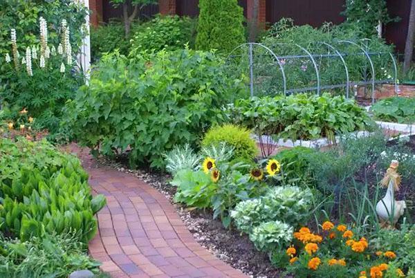 огород на даче