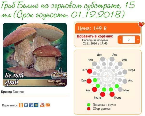семена белого гриба