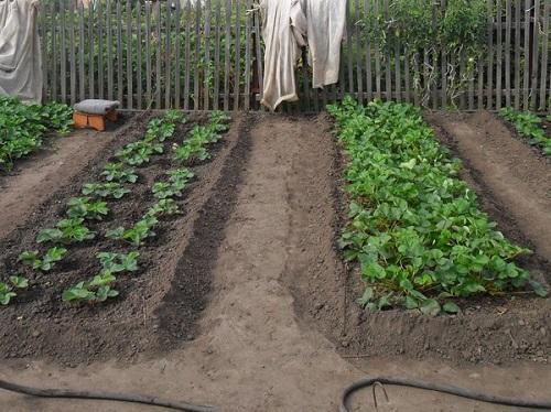 грядки с растениями