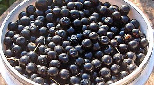 перебрать ягоды черемухи