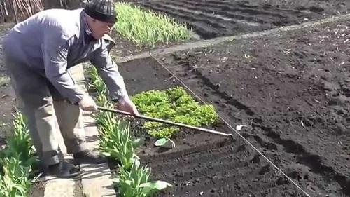 весенний посев