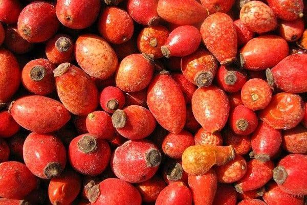 перебрать и помыть ягоды шиповника