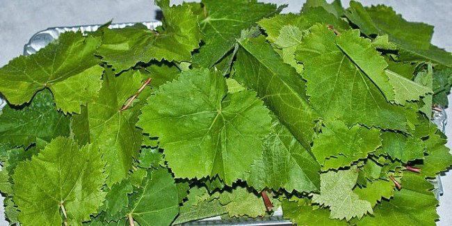 удалить черенки и протереть листья