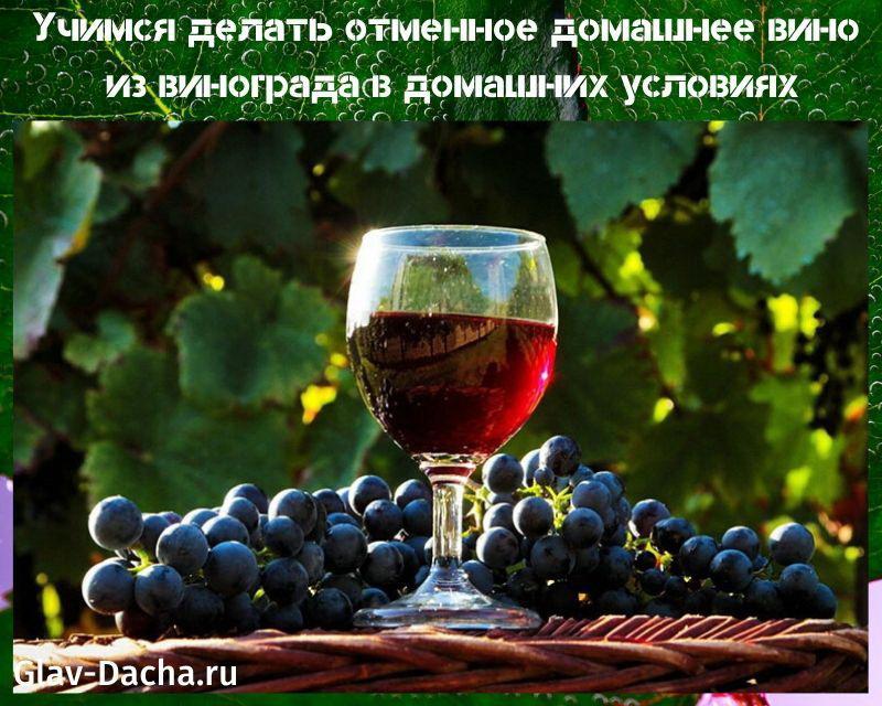 домашнее вино из винограда в домашних условиях
