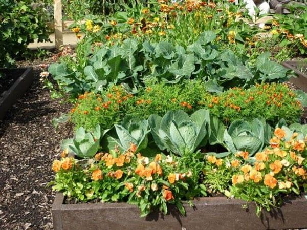 несколько видов растений на одной грядке