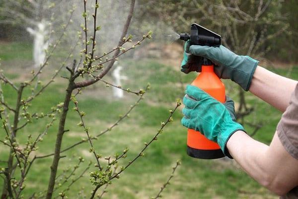 обработка дерева плодового против лишайников