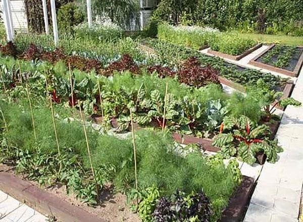 плотная посадка овощей разного срока созревания