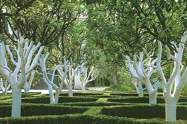 ухоженный плодовый сад