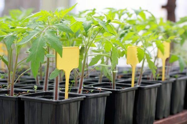 выбор семян и рассады