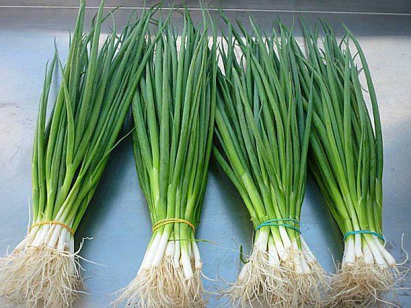 зеленый лук для цыплят бройлеров
