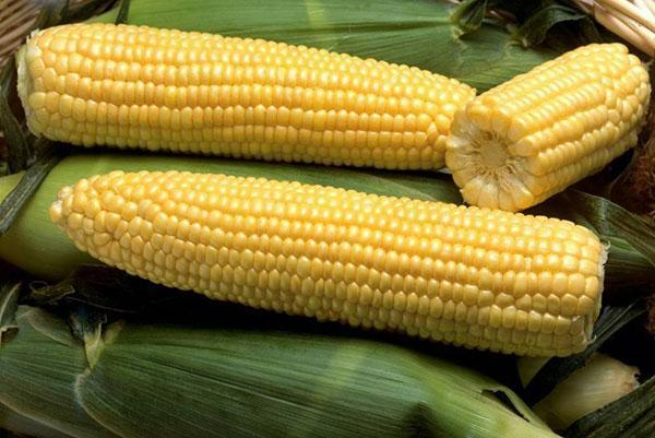 сорт кукурузы сахарной