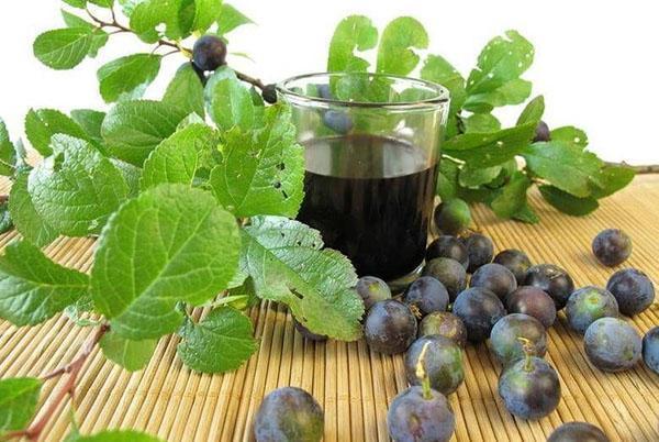 вино из слив по классическому рецепту