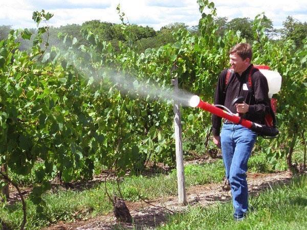 обработка против насекомых вредителей