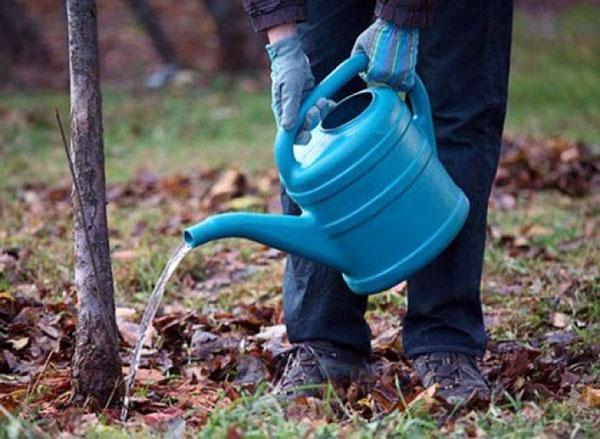 полив и подкормка жидкими удобрениями