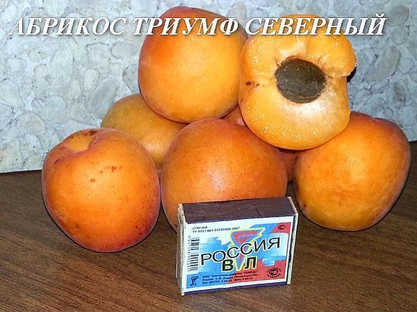 размеры плодов абрикоса Триумф Северный