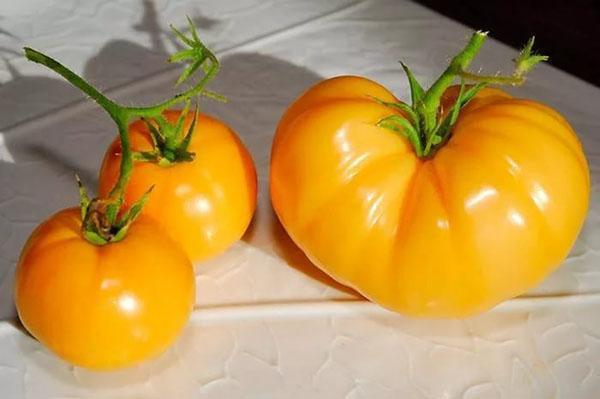 размеры плодов сорта Хурма