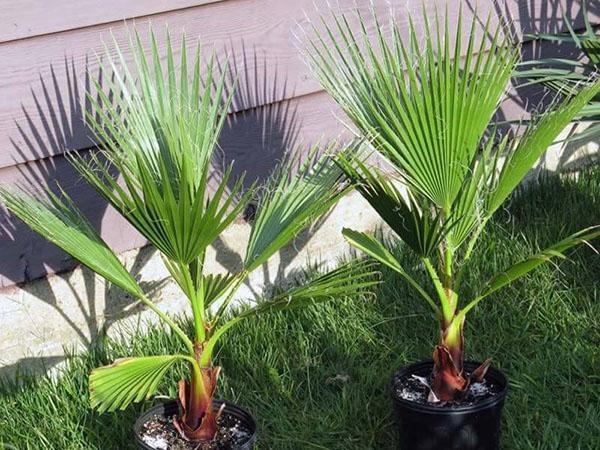ухоженные растения