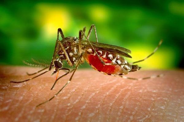 активность комаров летом