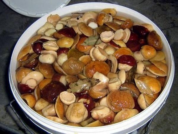 закладка грибов на засолку