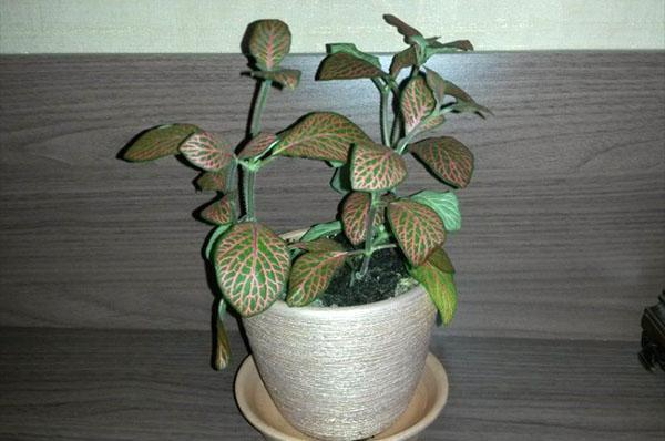 растение после обрезки
