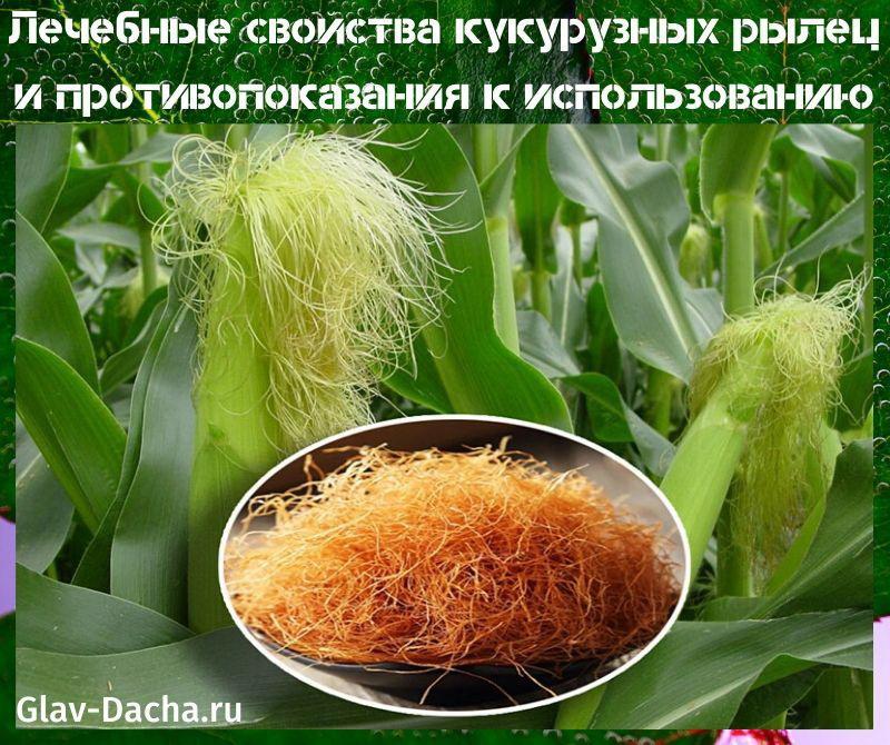 лечебные свойства кукурузных рылец
