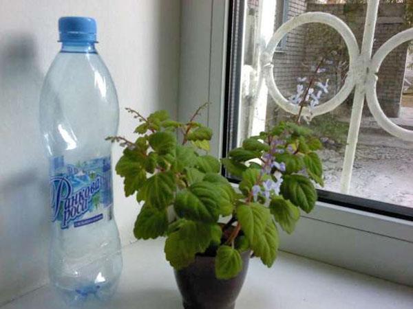отстоянная вода для полива