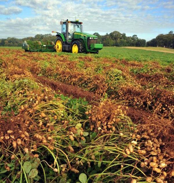 процесс сбора урожая