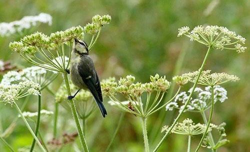 птица питается семенами