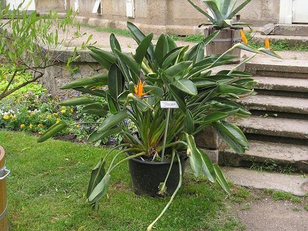 растение с удивительно красивым цветком