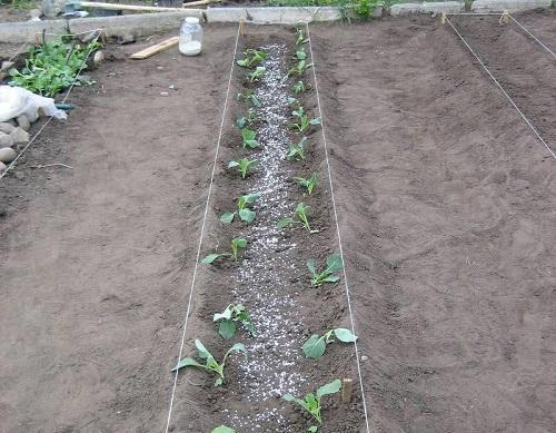 удобрение овощей