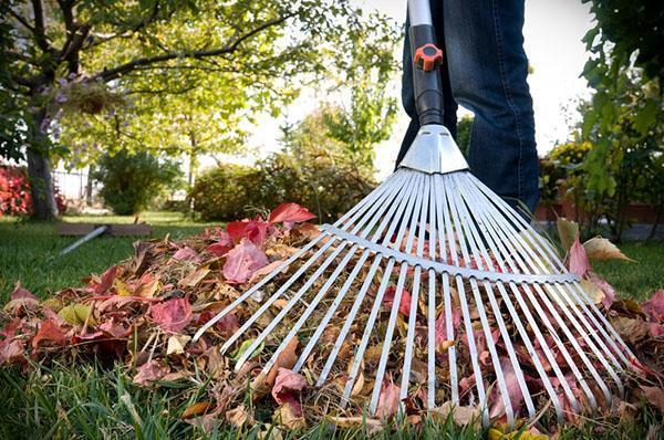 веерные грабли для уборки листьев
