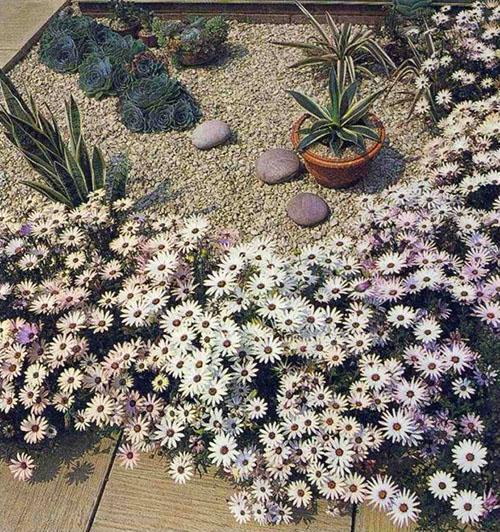 засухоустойчивые растения в саду