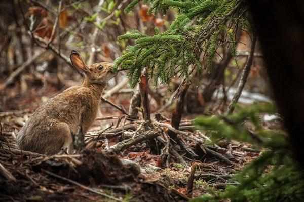 заяц в лесу