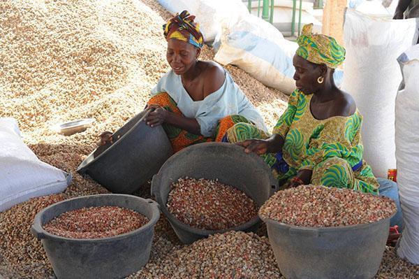женщины перебирают арахис