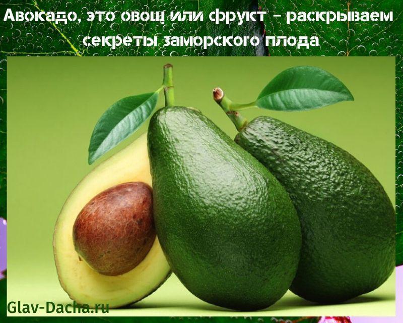 авокадо это овощ или фрукт