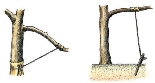 изменение наклона ветки