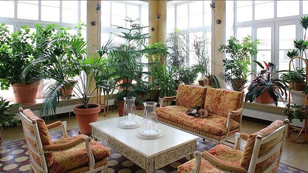 классический стиль зимнего сада