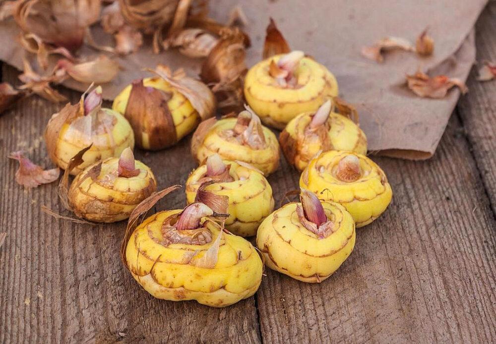 Украинский венки из цветов из лент