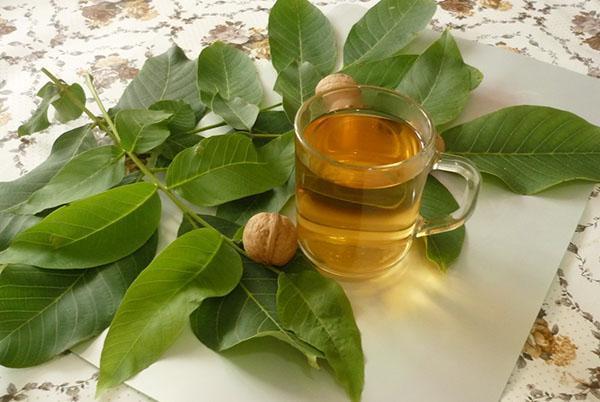 отвар листьев грецкого ореха