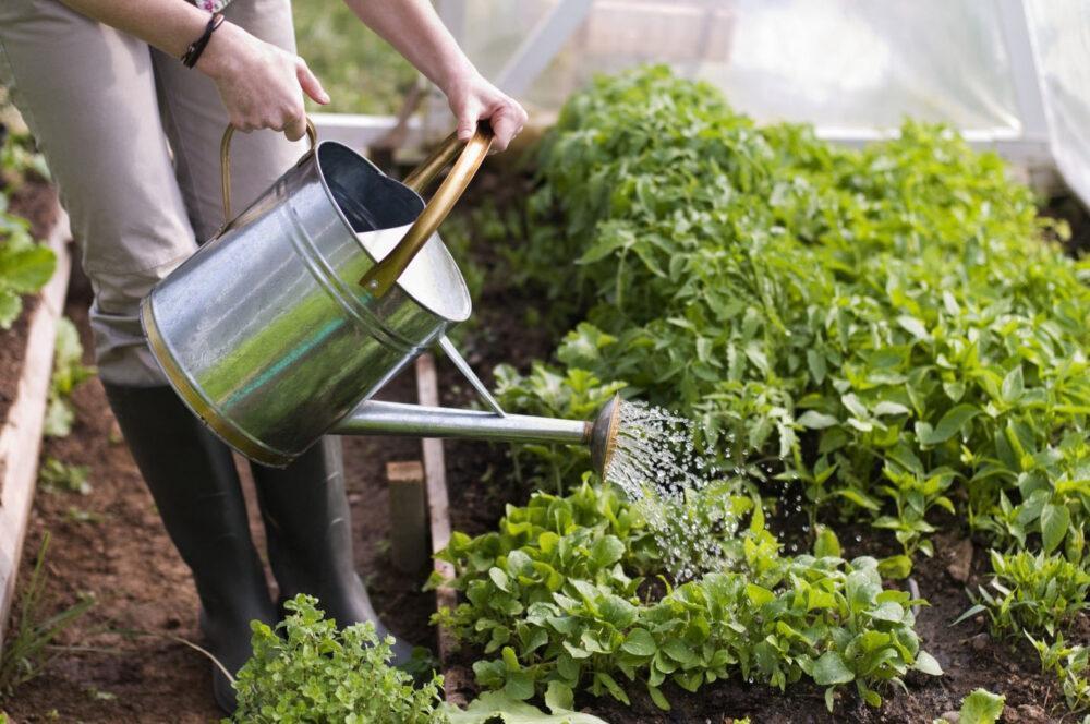 регулярный полив овощей