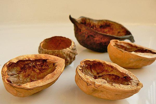 скорлупа грецких орехов против болезней