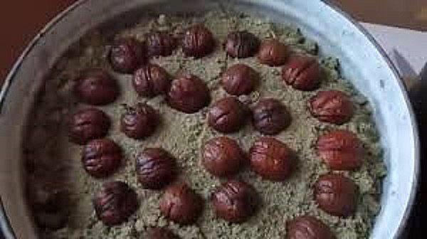 выложить орехи для проращивания