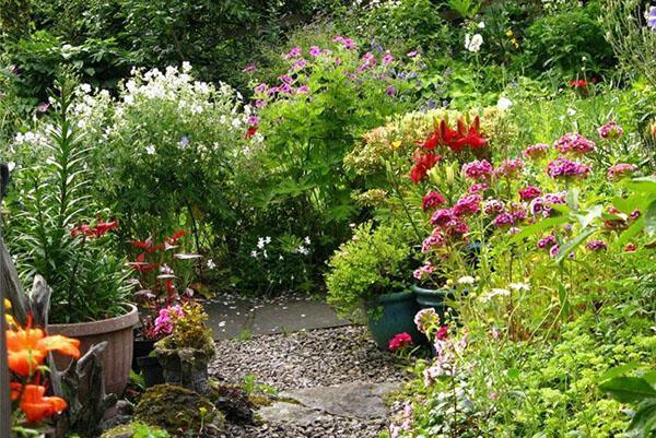цветники в июле