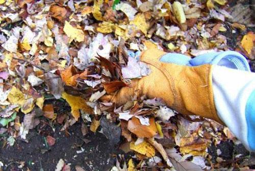 измельченные листья