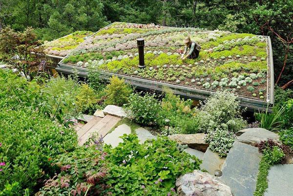 мини огород на плоской крыше