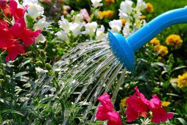 полив цветников в июле
