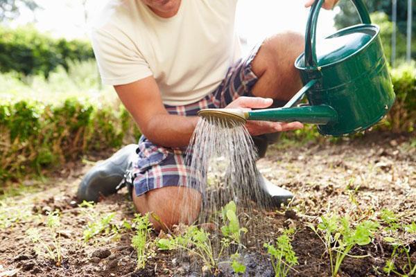 полив овощных грядок