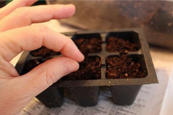 посев семян в отдельные ячейки